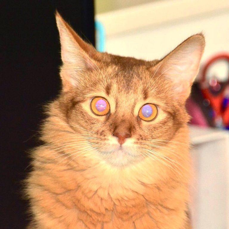 薄紫に光る瞳のプリンちゃん
