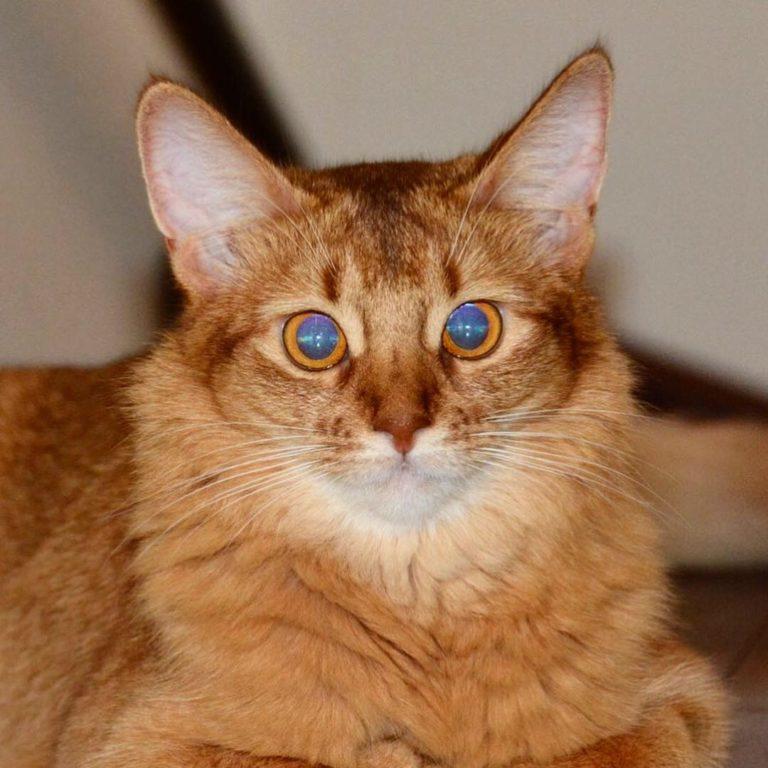 ブルーに光る瞳のプリンちゃん