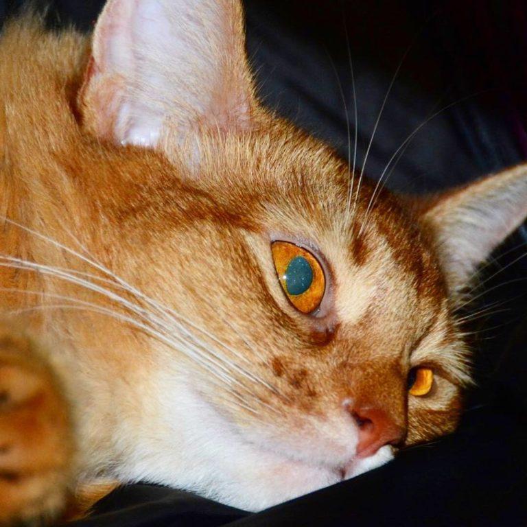 グリーンに光る瞳のプリンちゃん